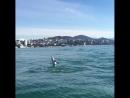 Шоу дельфинов в открытом море Сочи