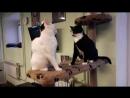 Соня и и ее мама Муся любят друг друга, а потом не очень Котокафе X-CAT, г. Петрозаводск