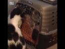 Кот освобождает собак
