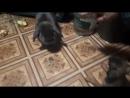 нападение на кролика