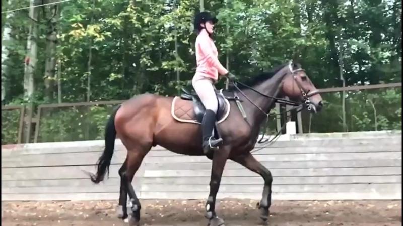 Сюса на лошадке