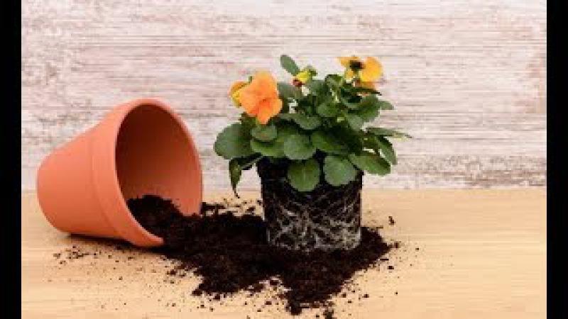 Общие правила ПЕРЕСАДКИ комнатных растений. Пересадка и перевалка