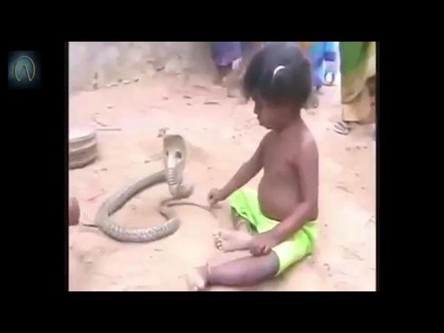 Animal Planet Дети Индии играют в короля Кобр 2016