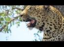 Kruger National Park Highlights ! Attacks, Kills, and Funny Moments.