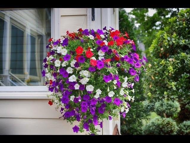 Во саду ли в огороде • Посев Петунии. Быстрые Всходы, Крепкая Рассада!