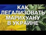 Как легализовать марихуану в Украине! Статья Дмитрия Гайдука