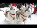 Вторые квест-гонки на собачьих упряжках Русский Север прошли в Тотьме