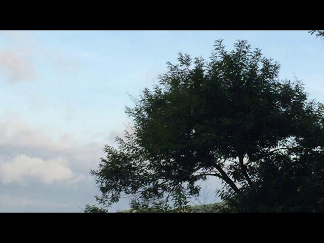 Tucanos: Casal. Galho Vizinho. Tiguera 360. JF. MG. Brasil. IMG_7719. 63,5 MB. 07h11. 10fev18