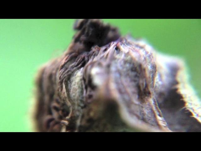 Ryan Sullivan Butterfly Kisses Telrae M006