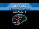 Мозг с Дэвидом Иглманом   Фильм 2   Что меня создаёт?    Док. Фильм HD 720p