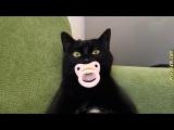 Приколы с кошками и котами Подборка смешных и интересных видео с котиками и кош...