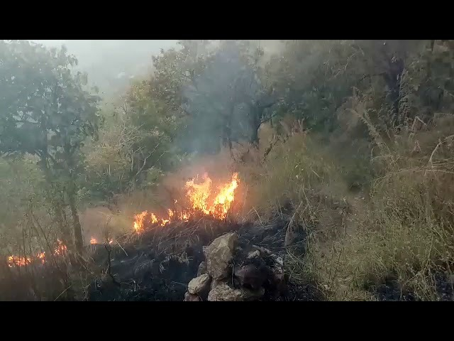 Students caught in forest fire in Tamil Nadus Theni