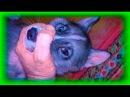 Тонкая ГРАНЬ, Как стать ВОЖАКОМ для Собаки