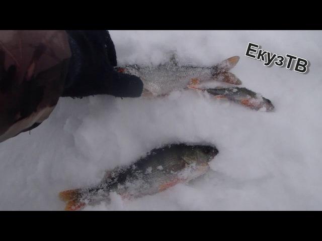 Пробираемся зимой к протоке Ниверга осмотреться и порыбачить