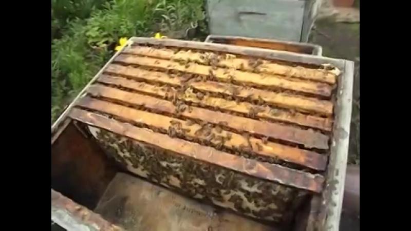 как лучше подставлять пчелам вощину, чтобы им не навредить и не спровоцировать а