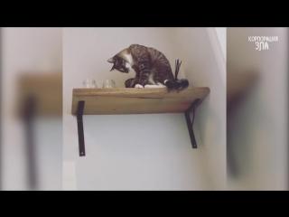 Приколы с Котами - Смешные коты и кошки 2017 __ Смешное Видео Корпорация Зла_HD.mp4