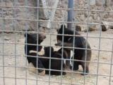 случай в зоопарке