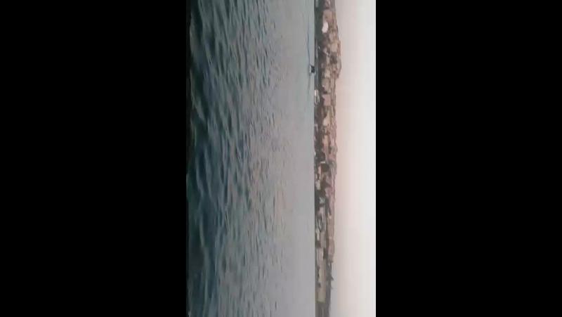 Fatih Mülayim - Live