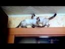 Коты нашли способ разминуться