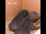 Медвежата, найденные в Новой Москве