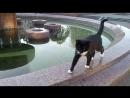 И днем и ночью кот учный все ходит вокруг фонтана