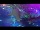 Океанариум Планета Нептун Санкт-Петербург СПб Главный аквариум Подводный тоннель Акулы Рыбы Часть 1