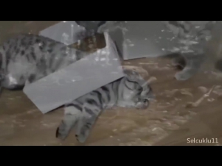 Флешбэк котейки