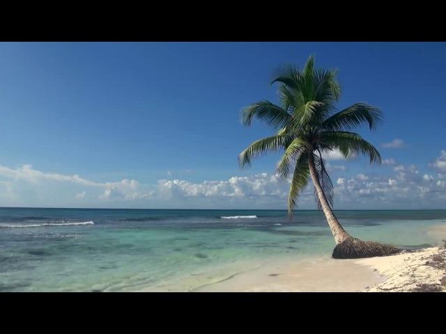 ЗВУКИ МОРЯ; 3 часа Видео Тропический пляж с голубым небом, белым песком и пальмой.