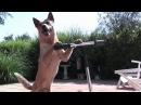 Смешные собаки приколы про животных