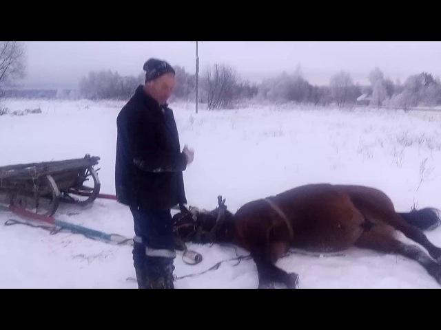 Прикол. Хитрая лошадка. Часть1.