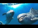 Relaxing Music for Stress Relief Dolphin singing Soothing Music for Meditation Therapy Sleep
