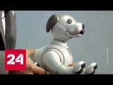 Sony воскресила робопса Aibo, а Apple сдала китайцев властям - Россия 24