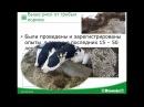 Общероссийский форум ANIMALPROFI: Животноводство. Жанетта Ходоровска: Метаболические проблемы