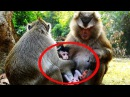 Oh My God! Vino Cute Baby Monkey Want To Have New Mom - He Don't Want To Go With Current Mom Monkey