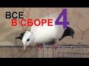 ВСЕ ЖИВОТНЫЕ В КОМНАТЕ 4 голуби, ворона, вОроны, кошки и собаки