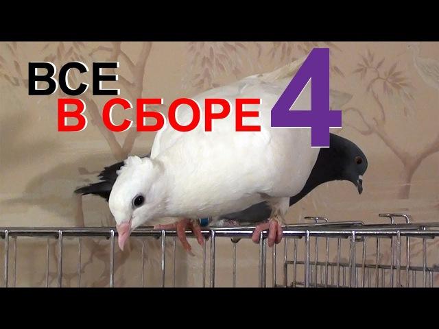 ВСЕ ЖИВОТНЫЕ В КОМНАТЕ 4 (голуби, ворона, вОроны, кошки и собаки)