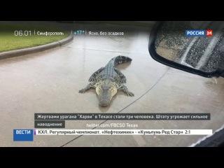 Новости на «Россия 24» • Сезон • Количество жертв урагана в США увеличилось до трех
