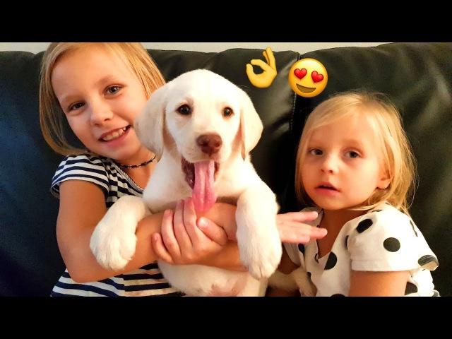 Реакция Подарили Щенка Лабрадора !! Мечта Николь СБЫЛАСЬ ! СОБАКА Puppy kids react EMOTIONAL