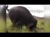 Дикий слон убил фермера в Индии