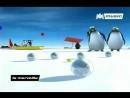 PiglooLe-Ragga-Des-Pingouins