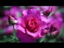'С днем рождения,мама!' (исп. Нина Кирсо, гр. 'Фристайл').mp4