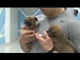 Два очаровательных щенка ищут хозяев