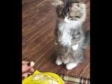 Умничка котик