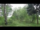 Пение птиц в Купавинском лесу, 24 мая 2018.