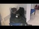 Алматыда құндыз тон ұрлаған арудың қылмысы әшкере болды (видео)