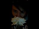 белыерозы белые розы беззащитны шипы