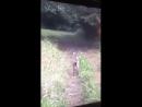 веселый олень