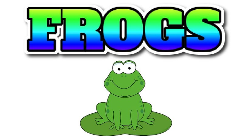 [Animal 19] Suprise fact about FROGS