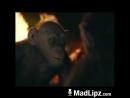 маймун маймун
