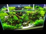 CIPS 2017 - LiuBo Aquarium (Aquascaping ideas)